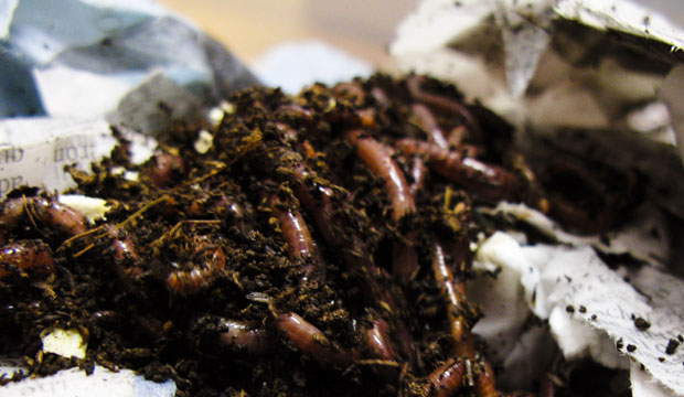 Goodlifer: How To Do Worm Composting in Your Apartment