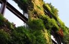 Goodlifer: Vertical Gardens, Green Roofs & Plant Walls in NYC