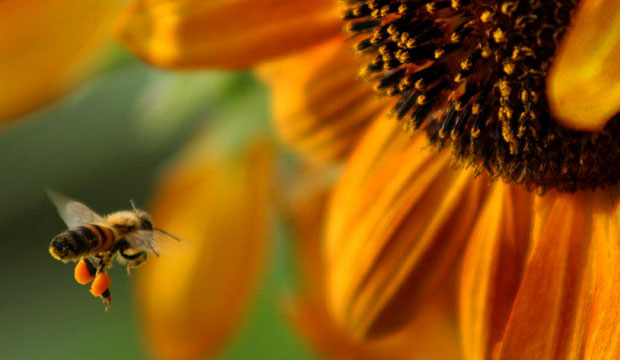 Goodlifer: Give Bees a Chance