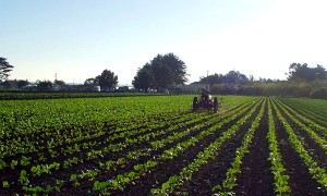 Goodlifer: Community Supported Agriculture