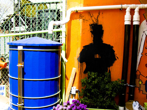 Rainwater is collected and used to water plants.