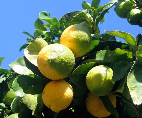 Lemons, your secret bathroom-cleaning weapon.