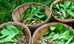 Goodlifer: CSA: Foraging at Paisley Farm