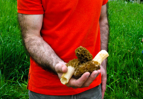 The master forager, who found four morels, while the rest of us found none, nada, zero.