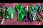 Goodlifer: 90 Days of Organic Raw Vegan-ness: week 13