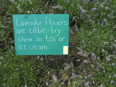 Sings with helpful tips for aspiring edible gardeners are posted throughout.