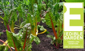 Goodlifer: The Edible Garden