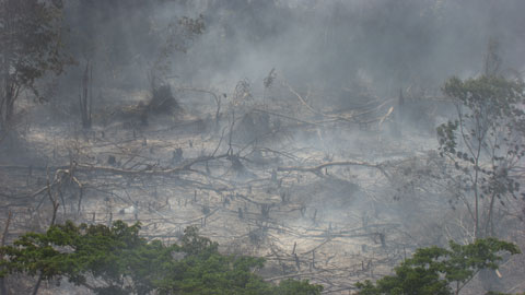 "Forest fire between Lagos and Port Harcourt, Nigeria. © ""HOME"" – an ELZEVIR FILMS – EUROPACORP coproduction."