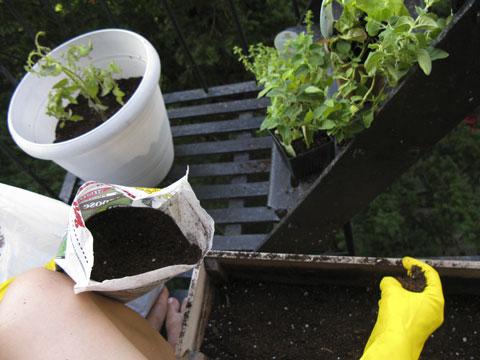 Adding some good potting soil mix.