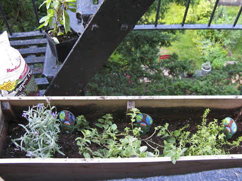 The start of my edible container garden! Needless to say, I have major envy for my downstairs neighbor's garden.