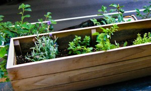 Goodlifer: My Very Own Edible Container Garden