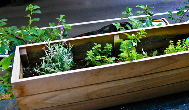 Goodlifer: My Very Own Edible Container Garden