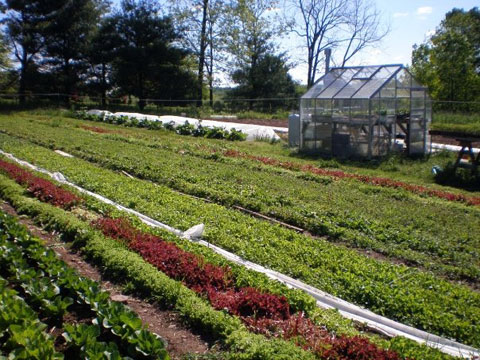 Many of the ingredients come from Brad's own organic garden and greenhouse.