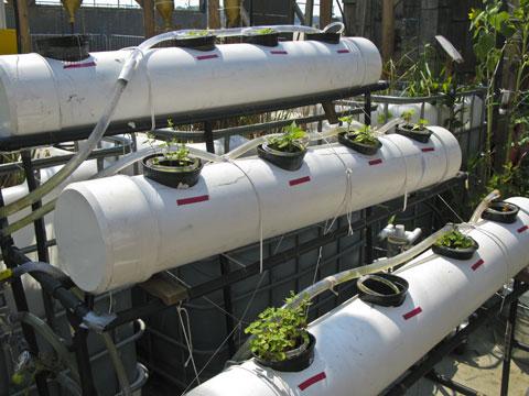 Hydroponic mini-farm.