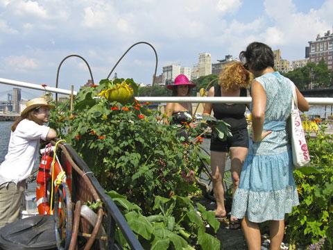 Volunteer gardening on The Waterpod.