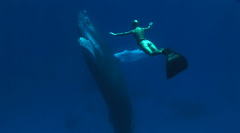 Freediver Mandy-Rae Cruickshank with a humpback whale.