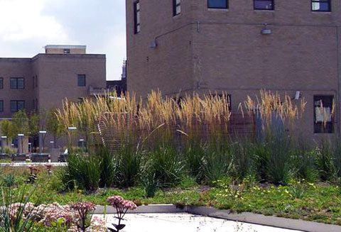 Low-maintenance native plants and grasses ensure sustainability.
