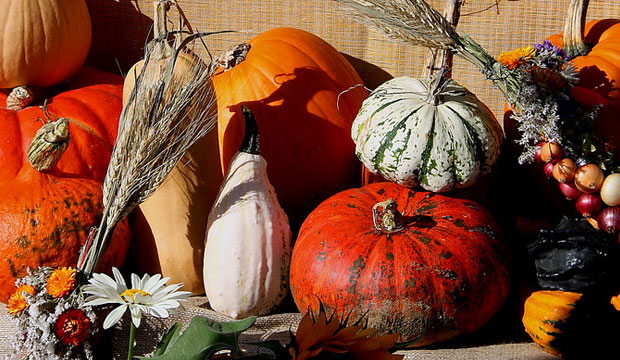 Goodlifer: Fall Holiday Decorating: Cheap, Conscious & Seasonal
