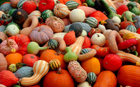 Natural decorations. What is more beautiful than a collection of deliciously colored pumpkins and gourds? Photo by cwalker71, Creative Commons.
