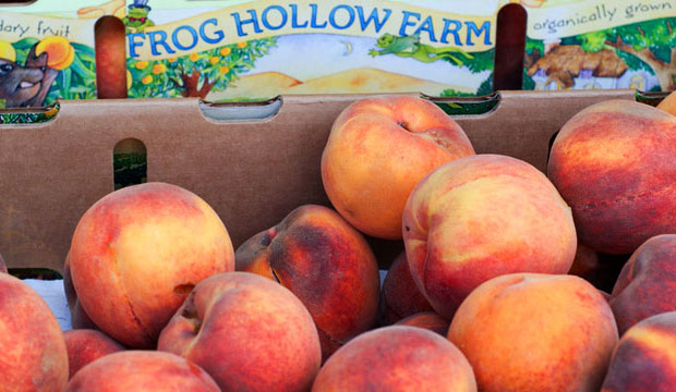 Goodlifer: It's All Peachy at Frog Hollow Farm
