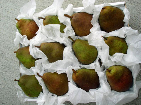 Pears, carefully wrapped.