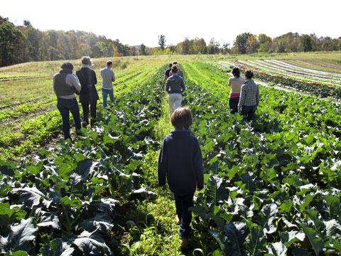 CSA members walking through the fields at Paisley Farm.