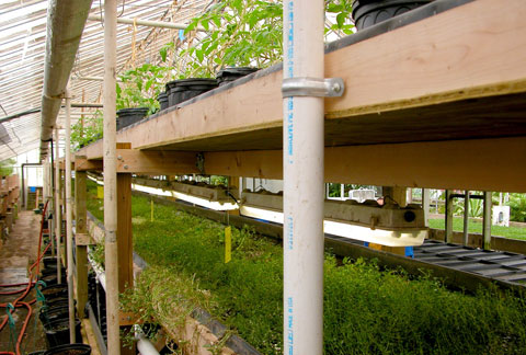 Utilizing vertical space and hydroponic (soilless) systems, Growing Power maximizes yield while minimizing energy use.