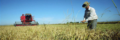 Since 1937, Lundberg has been using sustainable growing practices to enrich the soils and improve the rice crops