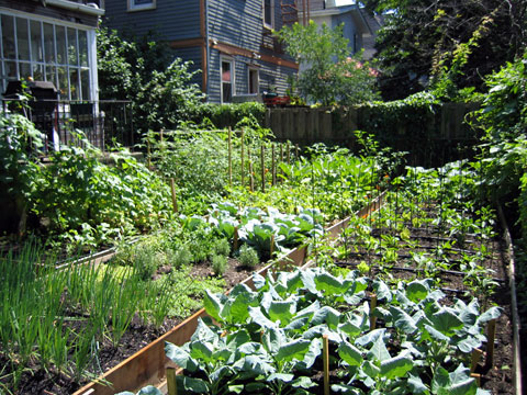 Foxtrot, BK Farmyards' first microfarm, located on 600 sq. ft. in Ditmas Park, Brooklyn it fed six people for twelve weeks.