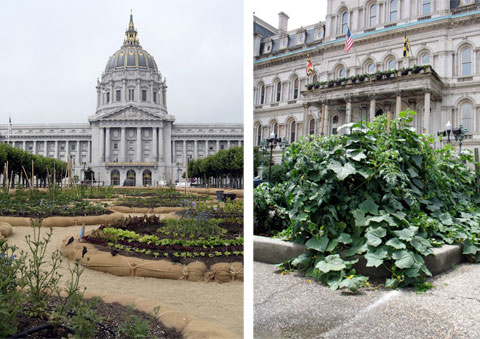 A temporary victory garden outside City Hall in San Francisco, CA and a permanent one outside City Hall in Baltimore, MD.
