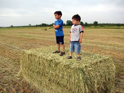 Massa's sons, perhaps surveying the fields they will one day tend to.