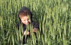 Goodlifer: Massa Organics: Wholesome Rice