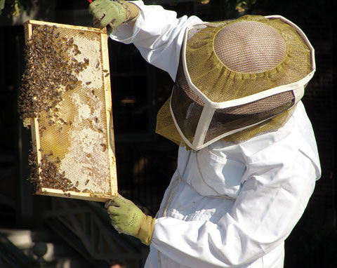 Urban rooftop beekeeper. Photo by oceandesetoiles, Creative Commons.