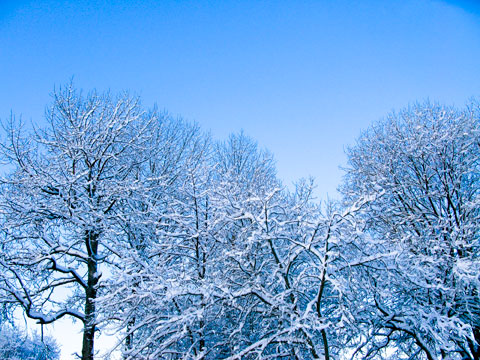 Snow-covered trees near my childhood home in Gävle, Sweden.