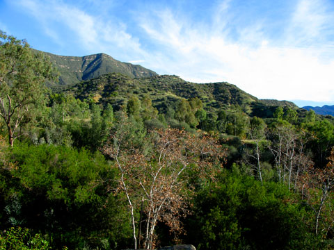 View of the Los Padres National Forest in Ojai, CA.