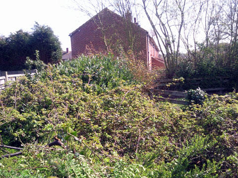 One of the landshare plots, before it was cleared to give room for a bountiful garden.