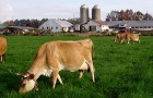 Goodlifer: Seven Stars Farm: Biodynamic Dairy