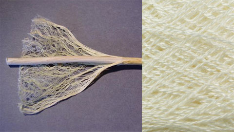 Tencel is a sustainable cellulose fiber made from regenerated wood-pulp.