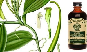 Goodlifer: The Real Organic Vanilla Deal
