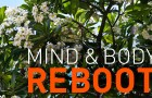 GL_MindBodyReboot1_ft