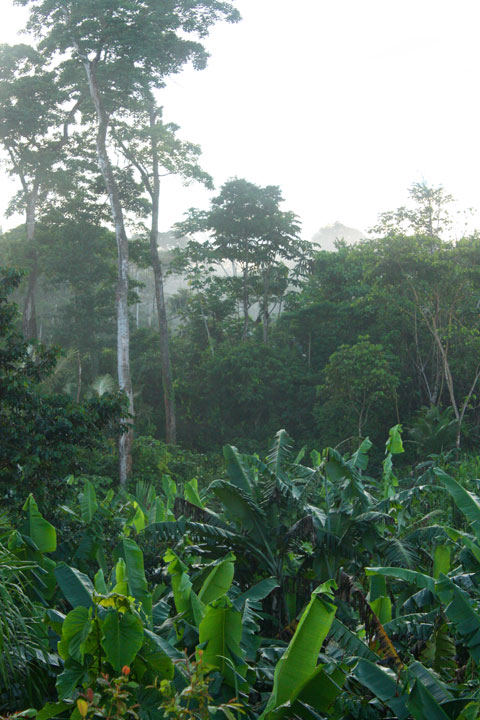 Some evidence and testing strongly suggests that a cure for diseases like cancer and AIDS may be found in our rainforests. Photo by Beth Doane.