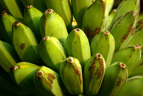 Plantains are members of the banana family and look similar to bananas. Photo by Hafiz Issadeen, Creative Commons.