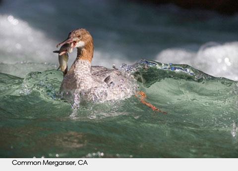 Goodlifer: Amazing Wildlife Photography