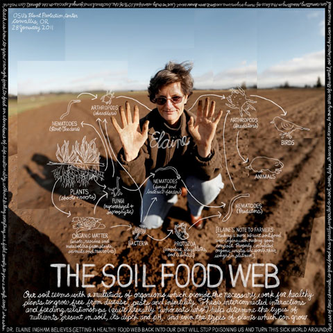 FOR HEALTHY SOIL WE NEED TO UNDERSTAND THE SOIL FOOD WEB: In parts of the world where human impact has been massive and unremitting, especially in the case of over-reliance on petrochemical-based pesticides and fertilizers, we are losing many needed and necessary species of micro-organisms, putting our soils health at great risk. According to Dr. Elaine Ingham, the food we grow needs to contain balanced nutrition. 