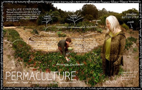 LEARNING FROM NATURE: Penny Livingston devotes herself to sustainable land use principles based on observing and learning from the efficiency and balance inherent in natural systems. The results are increased food production, the conservation of resources, and the re-integration of built environments (farms, homes, even towns) into their natural environment.  