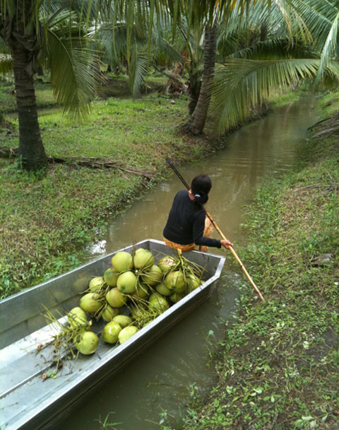 A gatherer paddles through and collects the clusters.