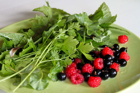 Inspired by this walk, I went foraging in my parents' yard for morning-smoothie ingredients.