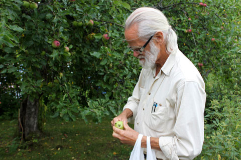 Uhrbom cutting a wild-growing apple into slices.