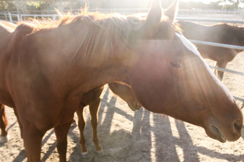 A few horses (and foals) also share the one-acre property.
