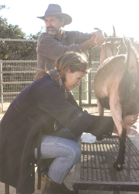 Visit Chivas farm on December 1st and try your hand at milking a goat. It's harder than it looks, trust me.